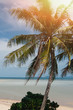 Tropical Beach landscape. Lens flare effect