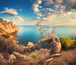 Colorful landscape with old tree, mountains, cloudy sky and blue sea. Sunny morning in Crimea. Beautiful colorful landscape in summer.