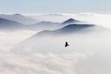 Sylwetki gór we mgle i latające ptaki - 112872824