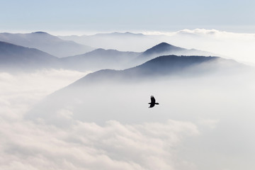 FototapetaSilhouettes of mountains in the mist and bird flying