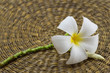 White frangipani/ Plumeria flowers on rattan plan background