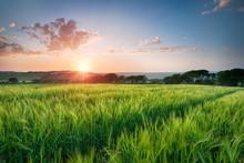 Beautiful Sunset Over Fields Of Barley