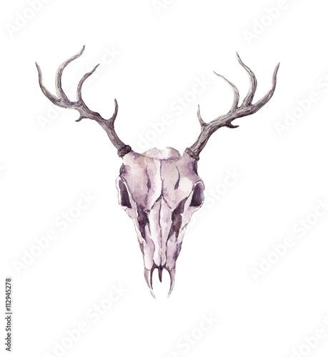 Printed kitchen splashbacks Watercolor Skull Skull of deer animal. Watercolor
