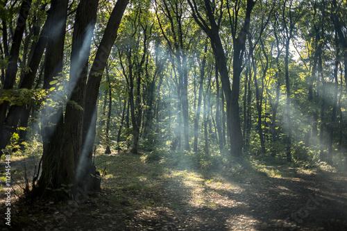 Deurstickers Herfst Beautiful forest