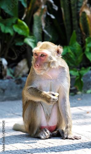In de dag Monkey eat foodv