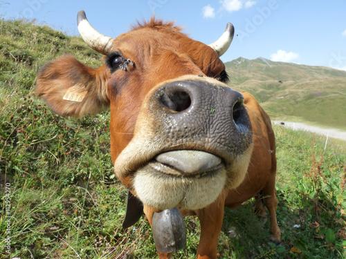 La pose en embrasure Vache Une belle vache Tarine au pays du beaufortain