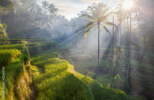 Photo sur Toile Bali terrace rice fields, Bali, Indonesia