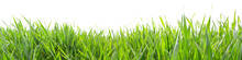 Grass In High Definition Isolated On A White Background