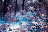 Plants covered with hoarfrost - 113027279