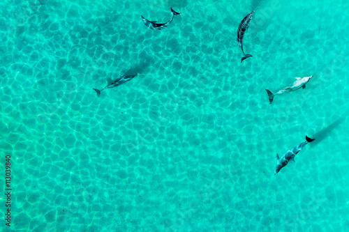 Valokuva  Aerial view of dophines in a tropical lagoon