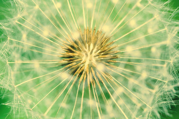 Obraz na Szkle Dandelion Interior Close Up