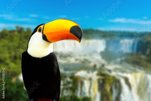 Deurstickers Toekan Toucan bird in Foz do Iguacu, Brazil