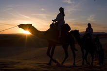 Dromedaries Taking Tourists On A Sunset Ride, Merzouga, Morocco
