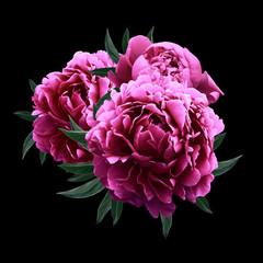 Obraz Three peonies