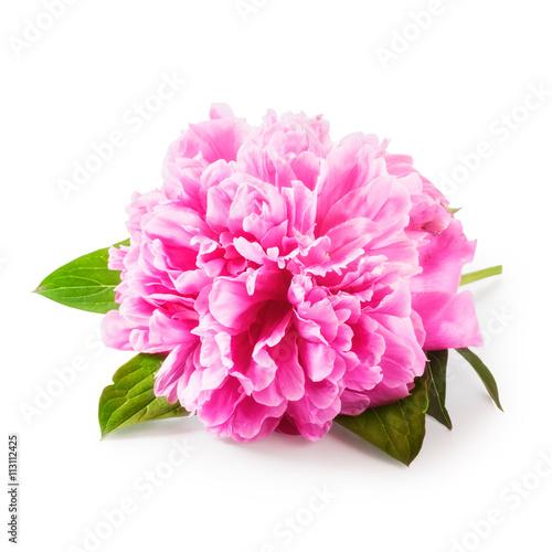 Poster de jardin Dahlia Peony flower.