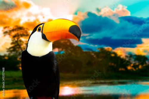 In de dag Toekan Toucan bird on the nature