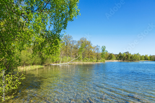 Canvas Prints Green coral Lakeshore with deciduous trees in summer
