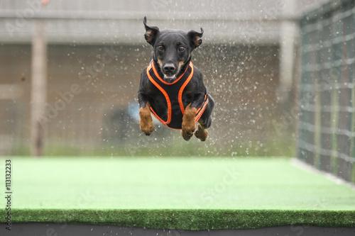 Poster Dog Hond hangt in de lucht.