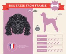 Poodle Dog Breed Vector Infogr...