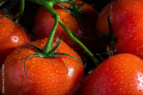 Tomatoes with water droplets - 113179865