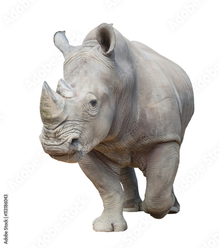 Spoed Foto op Canvas Neushoorn white rhinoceros isolated