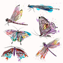 Set Of Detailed Vector Butterflies For Design
