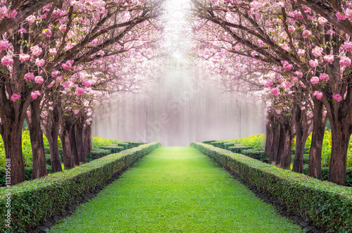 Photo sur Aluminium Arbre Romantic tunnel.