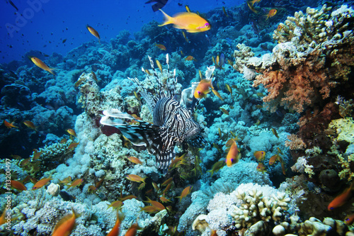Tuinposter Koraalriffen Exotic fish on coral reef