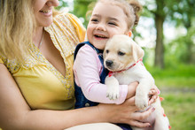 Purebred Puppy Labrador Retriever And Smiling Little Girl