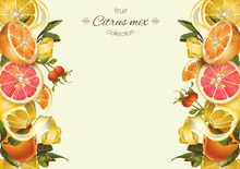 Vector Vintage Citrus Banner With Lemon, Hibiscus And Rose Hip.Design For Tea, Juice, Natural Cosmetics, Baking,candy And Sweets With Citrus Filling,grocery,health Care Products. With Place For Text.