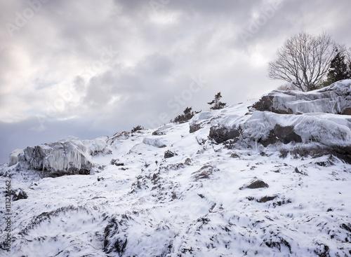 Magnolia USA, Massachusetts, Magnolia, Hill in winter