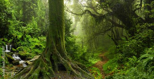 Tropical jungle © quickshooting