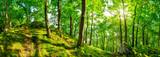 Fototapeta Las - Wald Panorama bei strahlendem Sonnenschein
