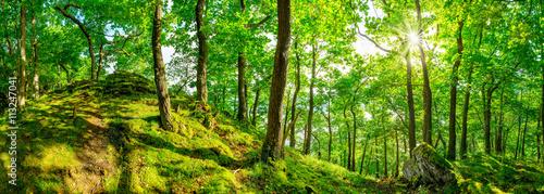 Fotobehang Bossen Wald Panorama bei strahlendem Sonnenschein