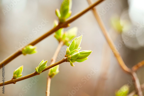 In de dag Lente First spring buds