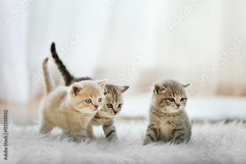 Obraz na plátně Small cute kittens on carpet