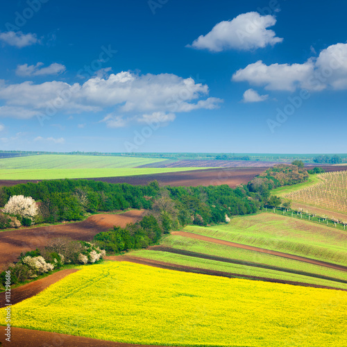 Poster Jaune Сountryside Colorful Fields and Sky Background - nature landsca