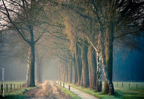 Cadres-photo bureau Nature Ochtend gezicht op een bospad