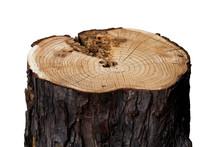 Stump Log Fire Wood - Isolated