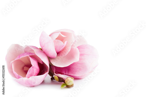 Foto op Plexiglas Magnolia pair pink magnolia