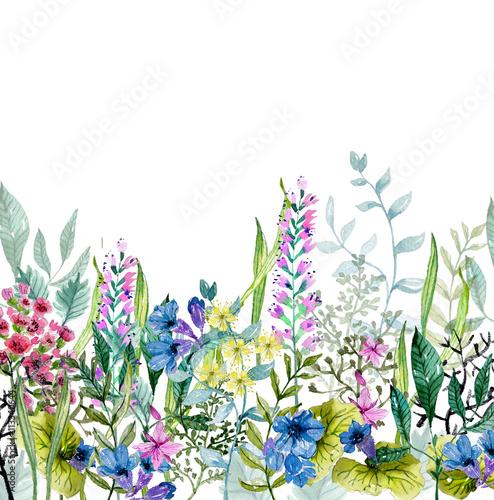 Akwarela dzikich ziół i kwiatów