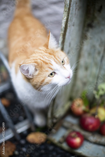Selective focus of cat Poster
