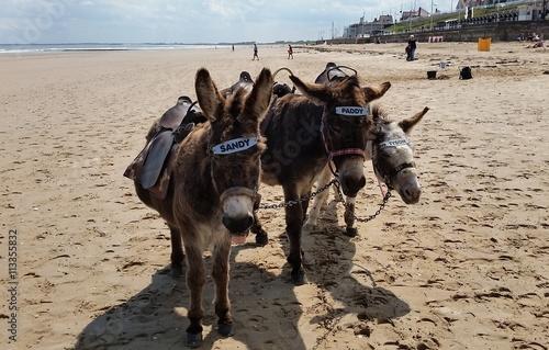 Seaside Donkeys, Bridlington, East Yorkshire