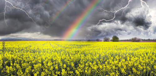 Cadres-photo bureau Jaune Thunderstorm on rapeseed field