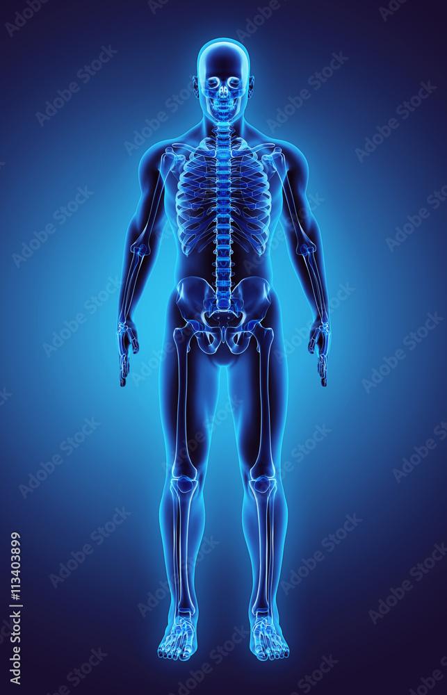 Illustration 3D Teil des menschlichen Skeletts, medizinisches ...