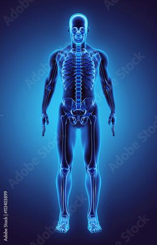 Fotografía  3D illustration Part of Human Skeleton, medical concept.