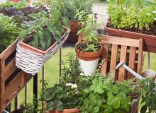Balkongarten Urban Gardening