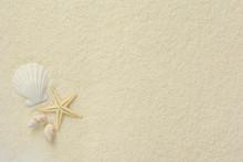 ヒトデと貝殻 白砂背...