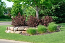 Landscaping With Weigela Shrub...