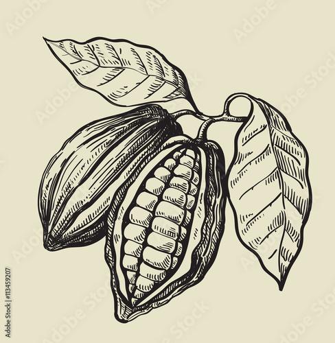 Fotografía  black cacao beans
